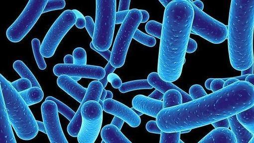 microbios-510x287