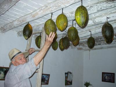 melons penjats